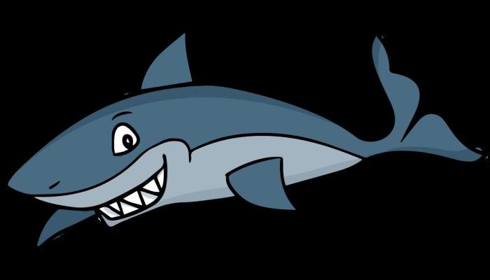 Koh Tao Sharks